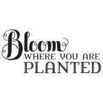 BLOOM WHERE YOU ARE PLANTED CHALK TRANSFER